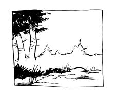 Watterson Fir Forest