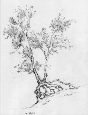Walking Tree Sketch