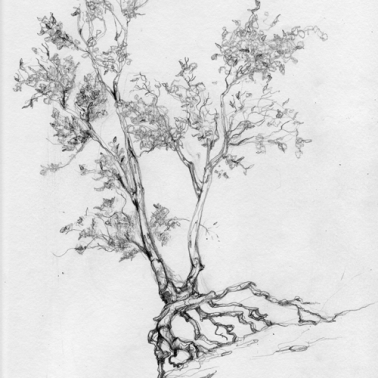 Walking Tree Sketch