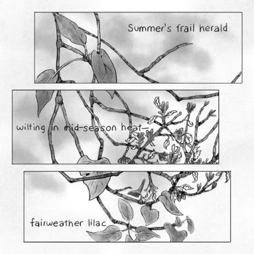 4-Summer's-frail-herald-500px